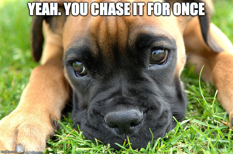 YEAH. YOU CHASE IT FOR ONCE | made w/ Imgflip meme maker