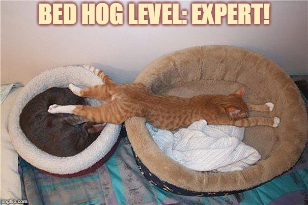 Cat Week - May 11-13, a Landon_the_memer, 1forpeace, & JBmemegeek Event!  |  BED HOG LEVEL: EXPERT! | image tagged in sleeping cat,memes,cat weekend,nixieknox | made w/ Imgflip meme maker