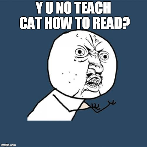 Y U No Meme | Y U NO TEACH CAT HOW TO READ? | image tagged in memes,y u no | made w/ Imgflip meme maker