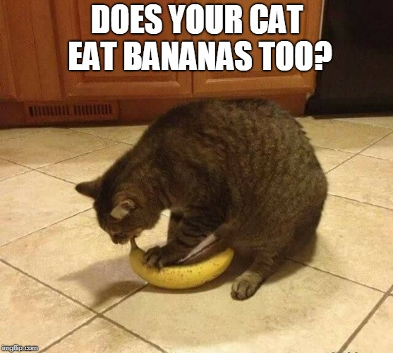 DOES YOUR CAT EAT BANANAS TOO? | image tagged in cats,bananas,cat weekend | made w/ Imgflip meme maker