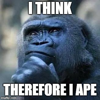 Thinking ape | I THINK THEREFORE I APE | image tagged in thinking ape | made w/ Imgflip meme maker
