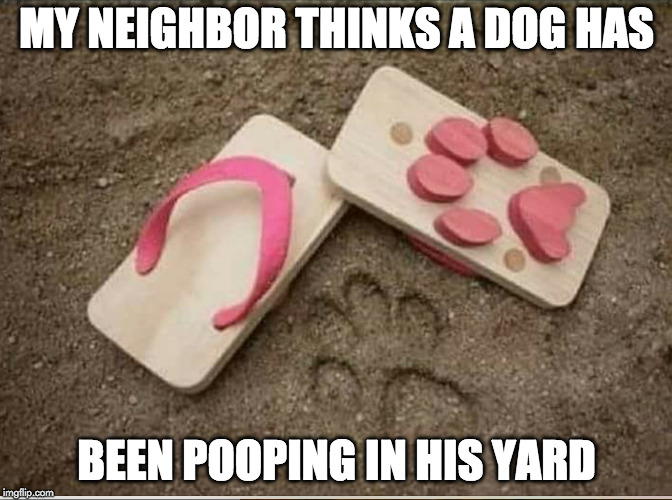;) | MY NEIGHBOR THINKS A DOG HAS BEEN POOPING IN HIS YARD | image tagged in dog,pooping,poop,hillary clinton | made w/ Imgflip meme maker