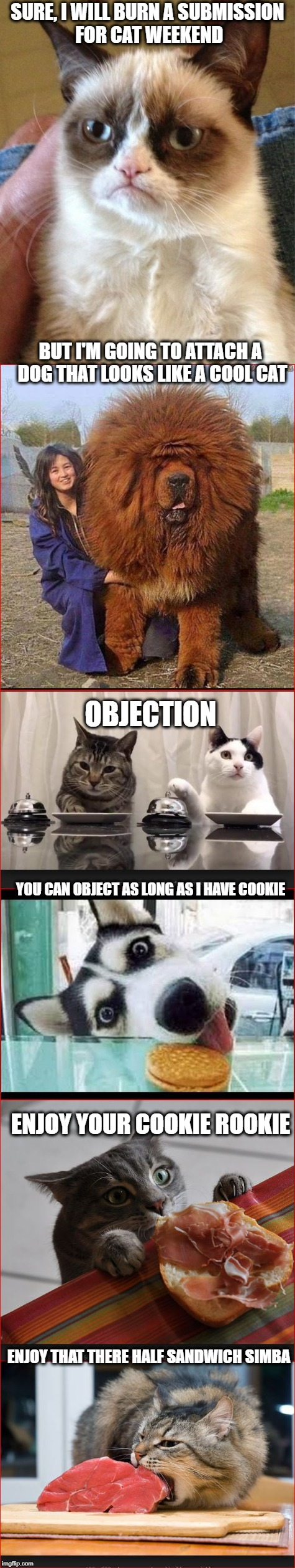 Grumpy cat is old and tired now so.. | SURE, I WILL BURN A SUBMISSION FOR CAT WEEKEND BUT I'M GOING TO ATTACH A DOG THAT LOOKS LIKE A COOL CAT OBJECTION YOU CAN OBJECT AS LONG AS  | image tagged in grumpy cat,cats,cat weekend,humor | made w/ Imgflip meme maker