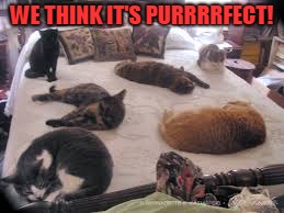 cats | WE THINK IT'S PURRRRFECT! | image tagged in cats | made w/ Imgflip meme maker