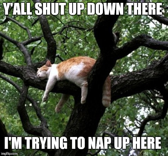 Y'ALL SHUT UP DOWN THERE I'M TRYING TO NAP UP HERE | made w/ Imgflip meme maker