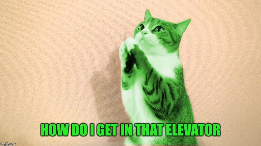 RayCat Pray | HOW DO I GET IN THAT ELEVATOR | image tagged in raycat pray | made w/ Imgflip meme maker