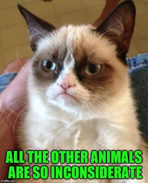 Grumpy Cat Meme | ALL THE OTHER ANIMALS ARE SO INCONSIDERATE | image tagged in memes,grumpy cat | made w/ Imgflip meme maker