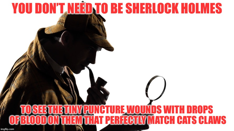 YOU DON'T NEED TO BE SHERLOCK HOLMES TO SEE THE TINY PUNCTURE WOUNDS WITH DROPS OF BLOOD ON THEM THAT PERFECTLY MATCH CATS CLAWS | made w/ Imgflip meme maker