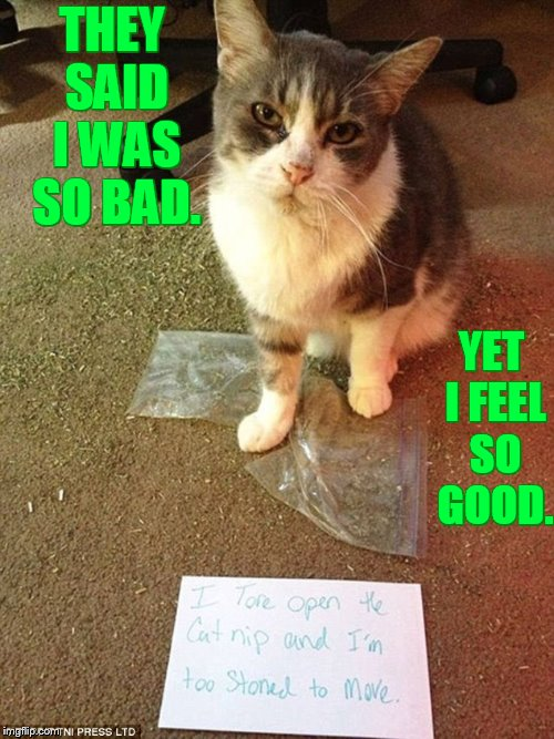 Cat Weekend, May11-13, a Landon_the_memer, 1forpeace, and JBmemegeek event (Late submission)  | THEY SAID I WAS SO BAD. YET I FEEL SO GOOD. | image tagged in memes,cat weekend,landon_the_memer,1forpeace,jbmemegeek,catnip | made w/ Imgflip meme maker