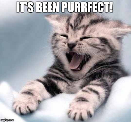 IT'S BEEN PURRFECT! | made w/ Imgflip meme maker