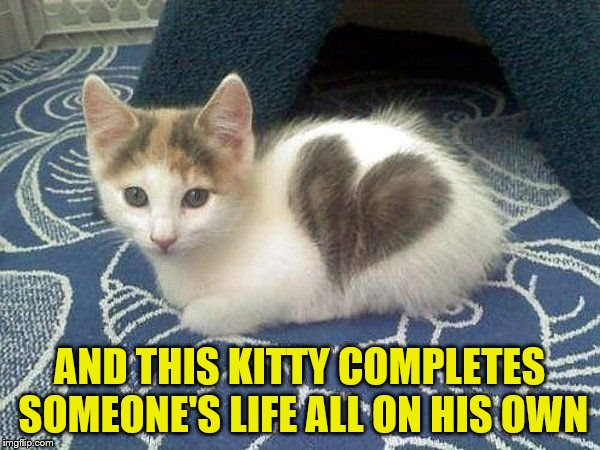 AND THIS KITTY COMPLETES SOMEONE'S LIFE ALL ON HIS OWN | made w/ Imgflip meme maker