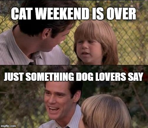 inspired from cat weekend | CAT WEEKEND IS OVER JUST SOMETHING DOG LOVERS SAY | image tagged in memes,thats just something x say,cat weekend | made w/ Imgflip meme maker