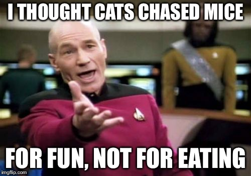 Picard Wtf Meme | I THOUGHT CATS CHASED MICE FOR FUN, NOT FOR EATING | image tagged in memes,picard wtf | made w/ Imgflip meme maker