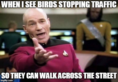 Picard Wtf | WHEN I SEE BIRDS STOPPING TRAFFIC SO THEY CAN WALK ACROSS THE STREET | image tagged in memes,picard wtf,why did the chicken cross the road,birds,traffic,geese | made w/ Imgflip meme maker