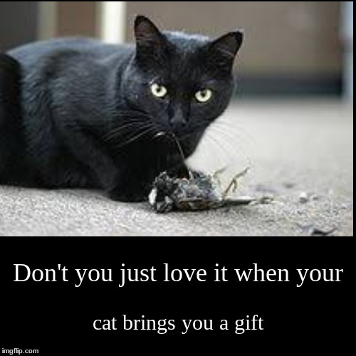 Don't you just love it when your | cat brings you a gift | image tagged in funny,demotivationals | made w/ Imgflip demotivational maker