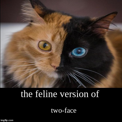the feline version of | two-face | image tagged in funny,demotivationals | made w/ Imgflip demotivational maker