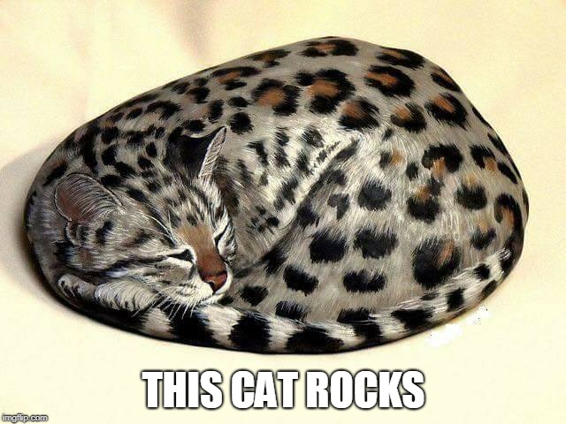 Pet cat or pet rock? | THIS CAT ROCKS | image tagged in cat rocks,pet rock,cats,art | made w/ Imgflip meme maker
