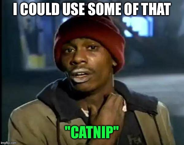 "Y'all Got Any More Of That Meme | I COULD USE SOME OF THAT ""CATNIP"" 