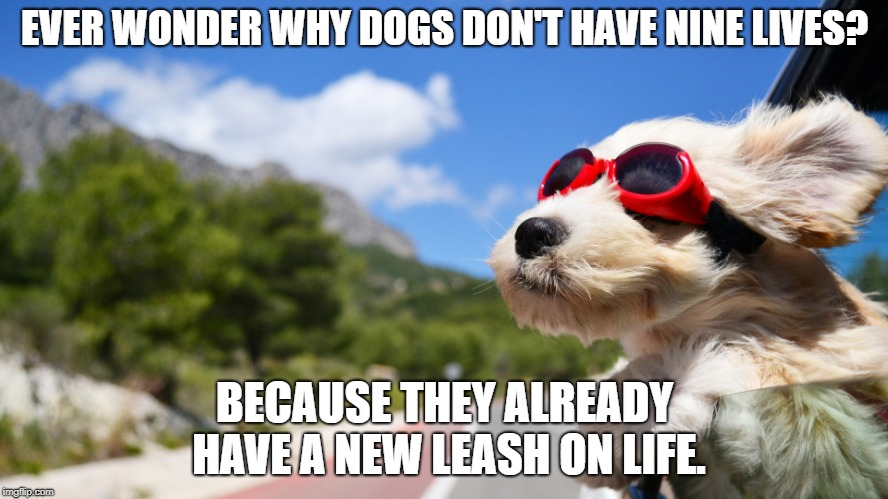 New Leash | EVER WONDER WHY DOGS DON'T HAVE NINE LIVES? BECAUSE THEY ALREADY HAVE A NEW LEASH ON LIFE. | image tagged in dog pun,bad pun,puppy pun,cute puppy,cute dog | made w/ Imgflip meme maker