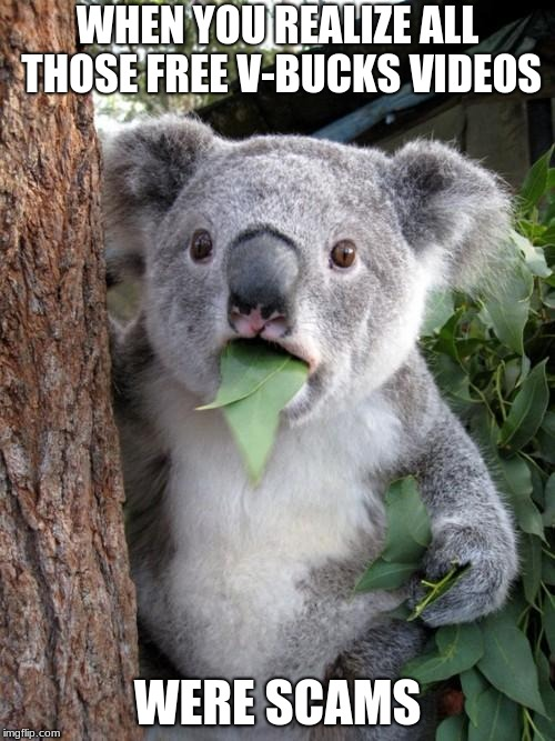 Surprised Koala Meme | WHEN YOU REALIZE ALL THOSE FREE V-BUCKS VIDEOS WERE SCAMS | image tagged in memes,surprised koala | made w/ Imgflip meme maker