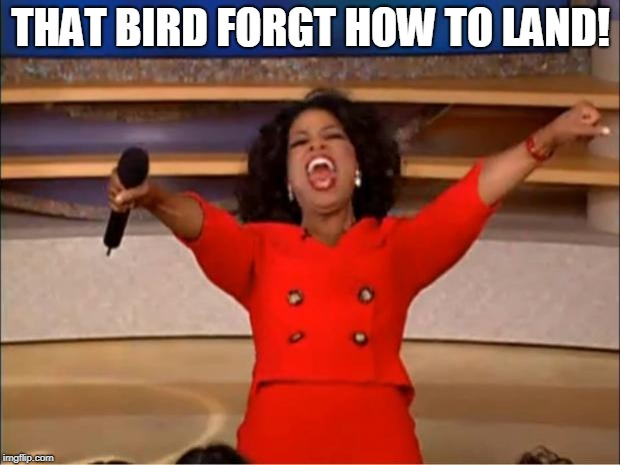 Oprah You Get A Meme | THAT BIRD FORGT HOW TO LAND! | image tagged in memes,oprah you get a | made w/ Imgflip meme maker