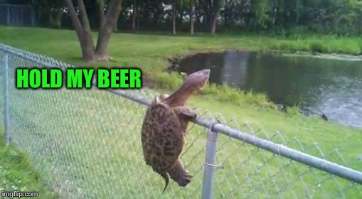HOLD MY BEER | image tagged in don't mess with the turtle | made w/ Imgflip meme maker
