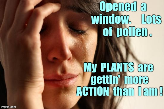Why I Hate Pollen | Opened  a   window.     Lots  of  pollen . My  PLANTS  are  gettin'  more  ACTION  than  I am ! | image tagged in memes,first world problems,action | made w/ Imgflip meme maker