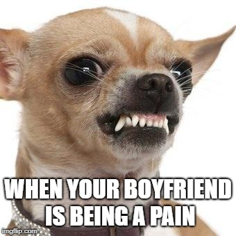 Annoyed Chihuahua | WHEN YOUR BOYFRIEND IS BEING A PAIN | image tagged in angry chihuahua,funny,humor | made w/ Imgflip meme maker