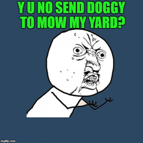 Y U No Meme | Y U NO SEND DOGGY TO MOW MY YARD? | image tagged in memes,y u no | made w/ Imgflip meme maker