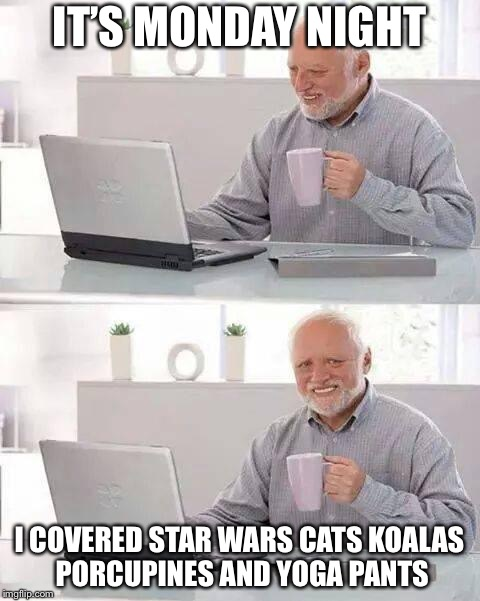 IT'S MONDAY NIGHT I COVERED STAR WARS CATS KOALAS PORCUPINES AND YOGA PANTS | image tagged in hide the pain harold,memes,funny | made w/ Imgflip meme maker
