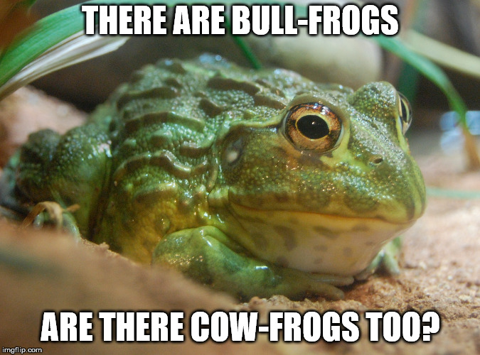 THERE ARE BULL-FROGS ARE THERE COW-FROGS TOO? | image tagged in animals | made w/ Imgflip meme maker