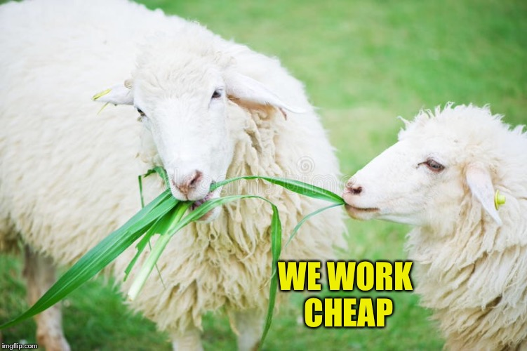 WE WORK CHEAP | made w/ Imgflip meme maker