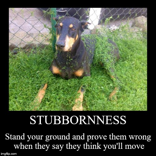 Oh no, I won't.  Watch me. | STUBBORNNESS | Stand your ground and prove them wrong when they say they think you'll move | image tagged in funny,demotivationals,dogs,mowing,grass,stubbornness | made w/ Imgflip demotivational maker