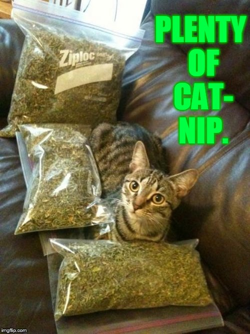 PLENTY OF CAT- NIP. | made w/ Imgflip meme maker