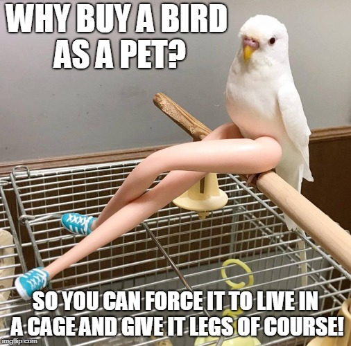 Sexy Bird | WHY BUY A BIRD AS A PET? SO YOU CAN FORCE IT TO LIVE IN A CAGE AND GIVE IT LEGS OF COURSE! | image tagged in memes,birds,barbie,angry birds | made w/ Imgflip meme maker