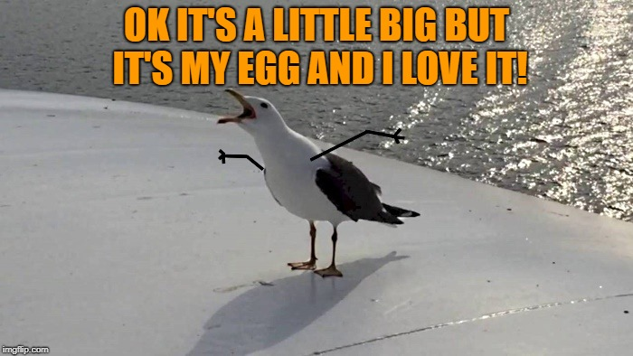 ok it's a little big but it's my egg and i love it! | OK IT'S A LITTLE BIG BUT IT'S MY EGG AND I LOVE IT! | image tagged in seagull,joke,egg,funny,silly | made w/ Imgflip meme maker