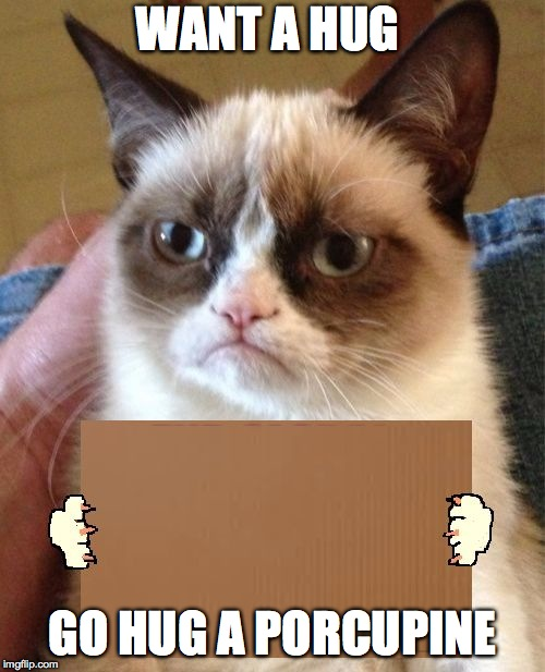 Grumpy Cat Cardboard Sign | WANT A HUG GO HUG A PORCUPINE | image tagged in grumpy cat cardboard sign | made w/ Imgflip meme maker