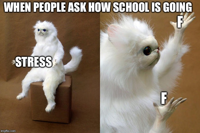 Persian Cat Room Guardian Meme | WHEN PEOPLE ASK HOW SCHOOL IS GOING F F STRESS | image tagged in memes,persian cat room guardian | made w/ Imgflip meme maker
