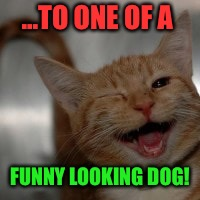 ...TO ONE OF A FUNNY LOOKING DOG! | made w/ Imgflip meme maker