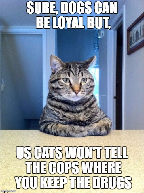Take A Seat Cat | SURE, DOGS CAN BE LOYAL BUT, US CATS WON'T TELL THE COPS WHERE YOU KEEP THE DRUGS | image tagged in memes,take a seat cat,random | made w/ Imgflip meme maker