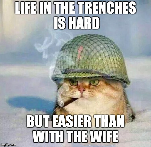War Cat | LIFE IN THE TRENCHES IS HARD BUT EASIER THAN WITH THE WIFE | image tagged in war cat | made w/ Imgflip meme maker