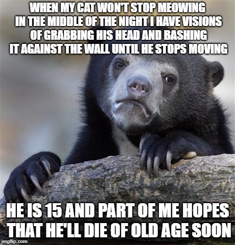 Confession Bear Meme | WHEN MY CAT WON'T STOP MEOWING IN THE MIDDLE OF THE NIGHT I HAVE VISIONS OF GRABBING HIS HEAD AND BASHING IT AGAINST THE WALL UNTIL HE STOPS | image tagged in memes,confession bear,AdviceAnimals | made w/ Imgflip meme maker