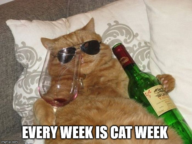 cool cat | EVERY WEEK IS CAT WEEK | image tagged in cat,cool cat stroll | made w/ Imgflip meme maker