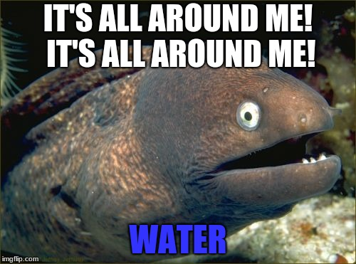 Bad Joke Eel Meme | IT'S ALL AROUND ME! IT'S ALL AROUND ME! WATER | image tagged in memes,bad joke eel,water,funny | made w/ Imgflip meme maker
