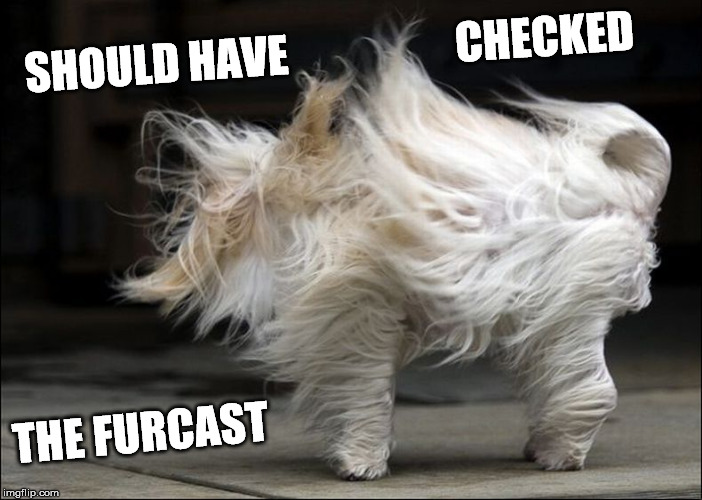 It's a bit windy today |  SHOULD HAVE                   CHECKED; THE FURCAST | image tagged in wind,windy,meme | made w/ Imgflip meme maker