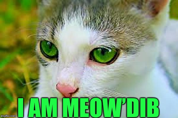 Meow'Dib | I AM MEOW'DIB | image tagged in meowdib 600px,memes | made w/ Imgflip meme maker
