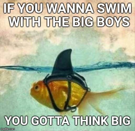 Goldfish Shark | IF YOU WANNA SWIM WITH THE BIG BOYS YOU GOTTA THINK BIG | image tagged in goldfish shark | made w/ Imgflip meme maker