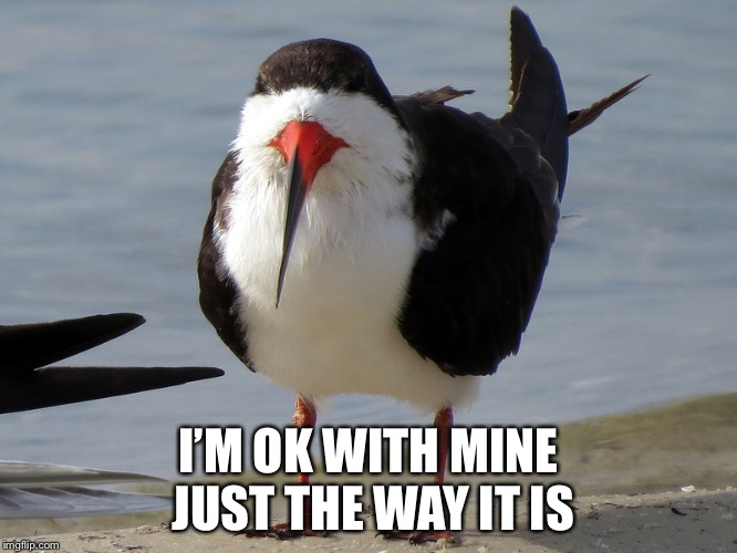 Even Less Popular Opinion Bird | I'M OK WITH MINE JUST THE WAY IT IS | image tagged in even less popular opinion bird | made w/ Imgflip meme maker