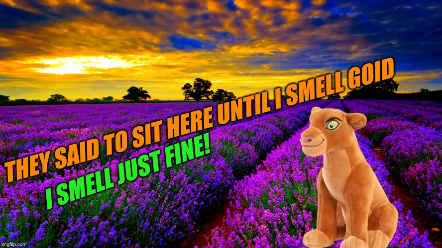 THEY SAID TO SIT HERE UNTIL I SMELL GOID I SMELL JUST FINE! | made w/ Imgflip meme maker