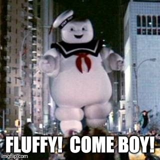 FLUFFY!  COME BOY! | made w/ Imgflip meme maker